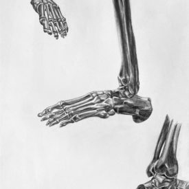 Foot Bones Study