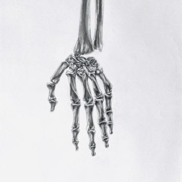 Hand Bones Study